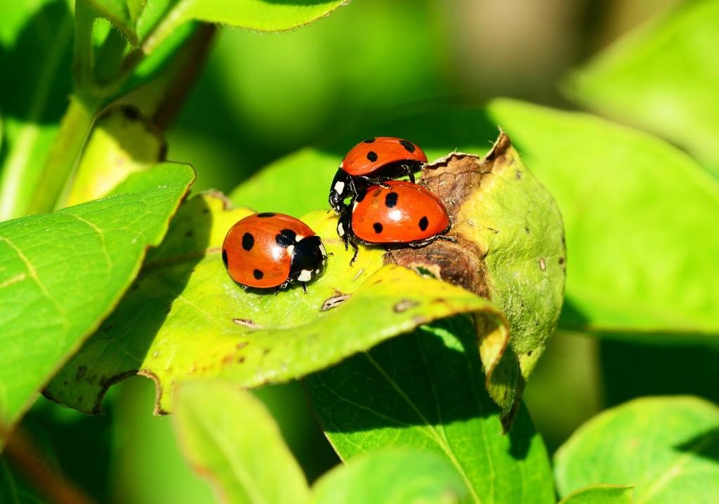 Social Community: relazioni, business, amicizie sul web